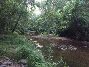 Creek along Jemison Train, Mountain Brook--calm and peaceful
